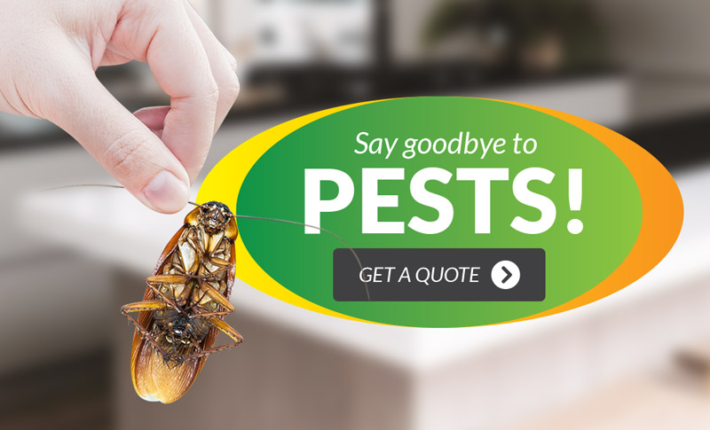 Say Goodbye to Pests