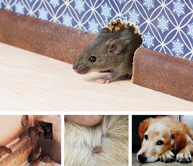 Rodent and Flea Control
