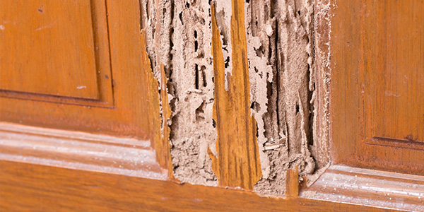 Termite Management in the home